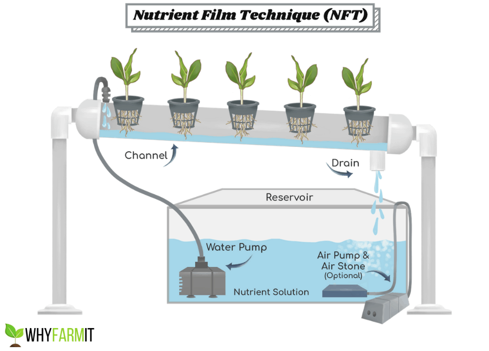 Diagram of the NFT Hydroponic System