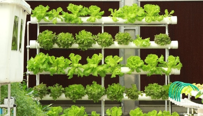 Indoor NFT Hydroponic System