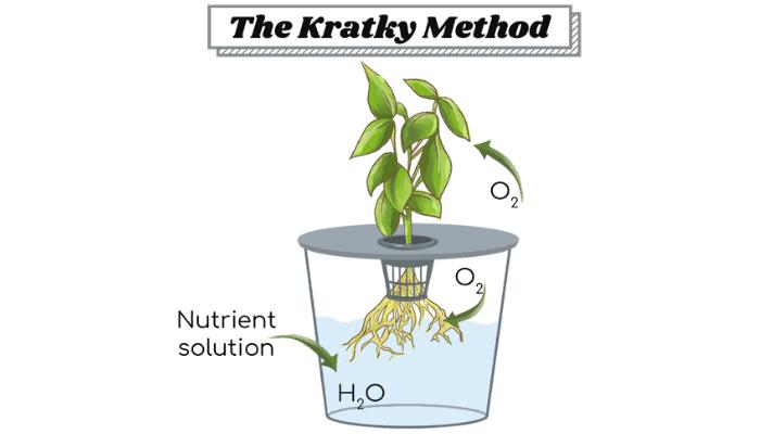 The Kratky Method of Hydroponics