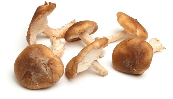 Freshly Grown Shiitake Mushrooms