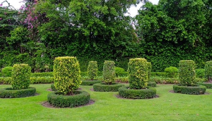 Ornamental Trees in a Park