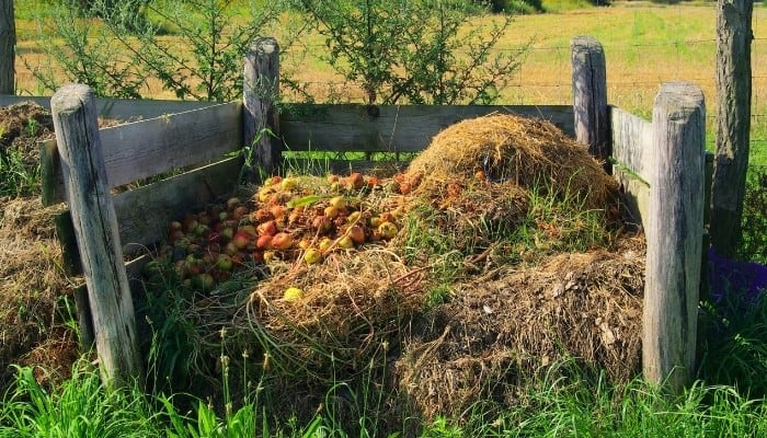 A quaint compost bin made of wood with hay and apples showing on top.