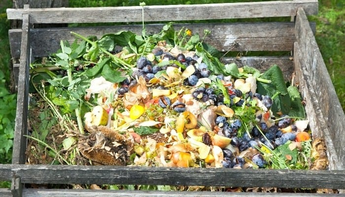 A wooden compost bin nearly full to the top of compostable materials.