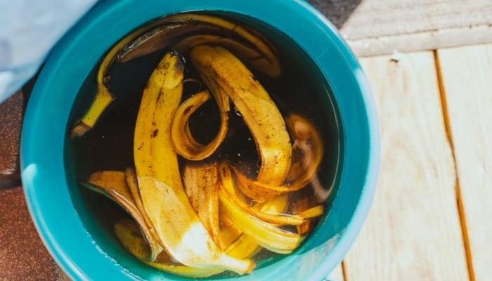 Banana Peel Fertilizer Water