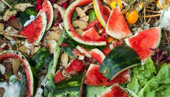 The top layer of a compost heap showing watermelon rinds, lettuce leaves, and black ants.