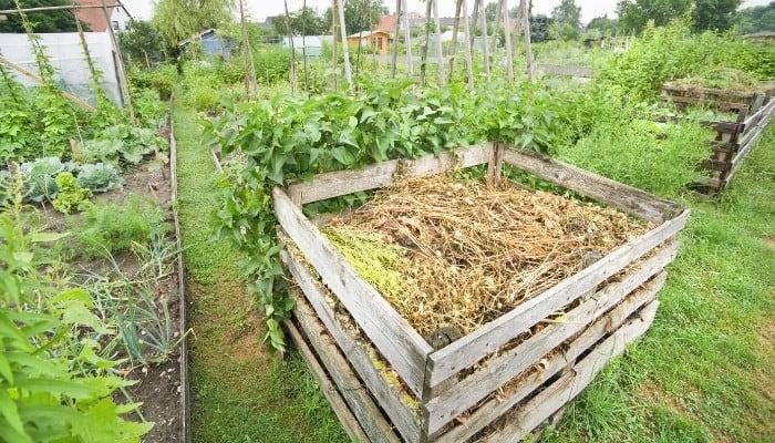 A wooden compost bin set among an idyllic vegetable garden.