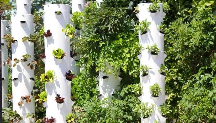 Aeroponics Tower Garden With Vegetables