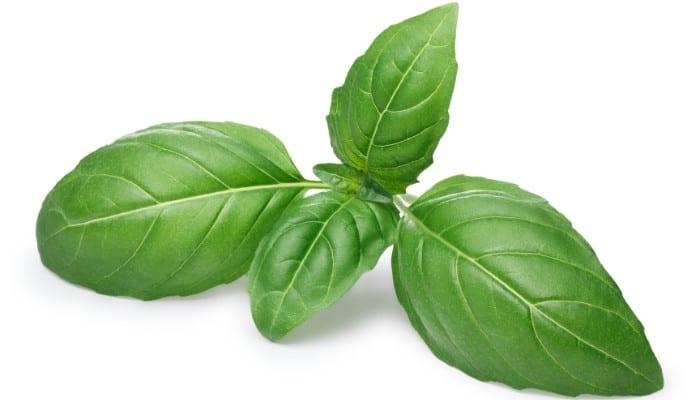 Genovese Basil Leaves