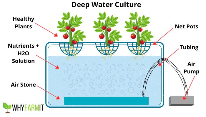 Graphic explaining deep water culture hydroponics