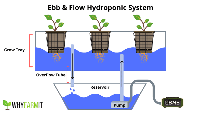 Graphic showing the basics of ebb and flow hydroponics