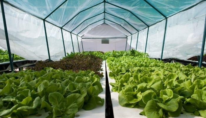 Hydroponic Grow Tent
