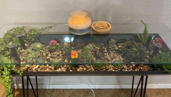 Living Terrarium Table With Succulents