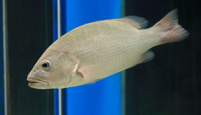 A silver perch with a blue vertical light in the background.