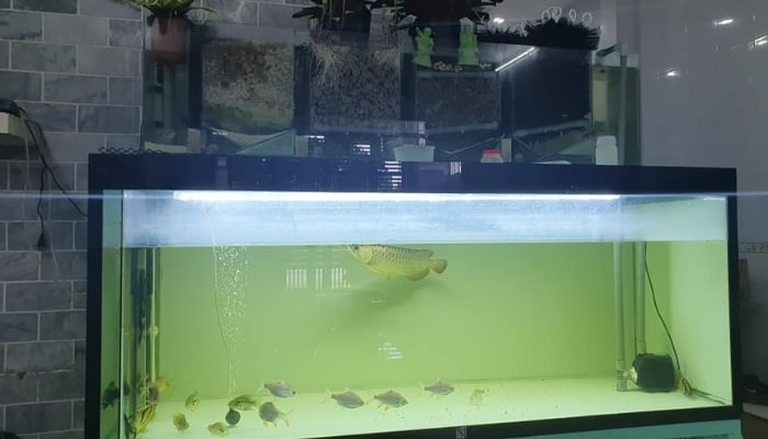Aquaponic Fish Tank Growing Plants