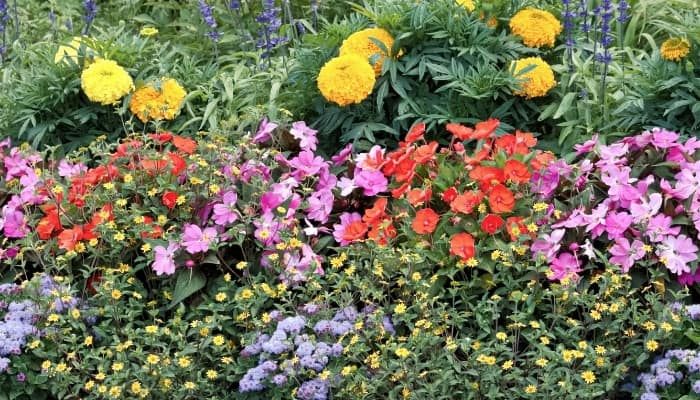 A backyard garden overflowing with beautiful blooms.