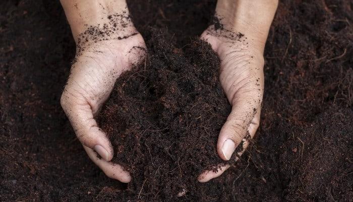 A gardener holding freshly mixed garden soil in his hands.