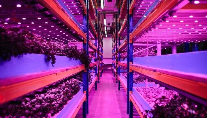 Large Aquaponic Farm in Warehouse