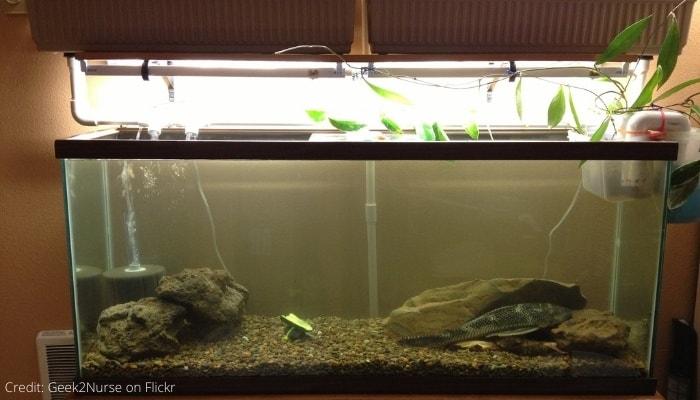 Large Indoor Aquarium for Aquaponics