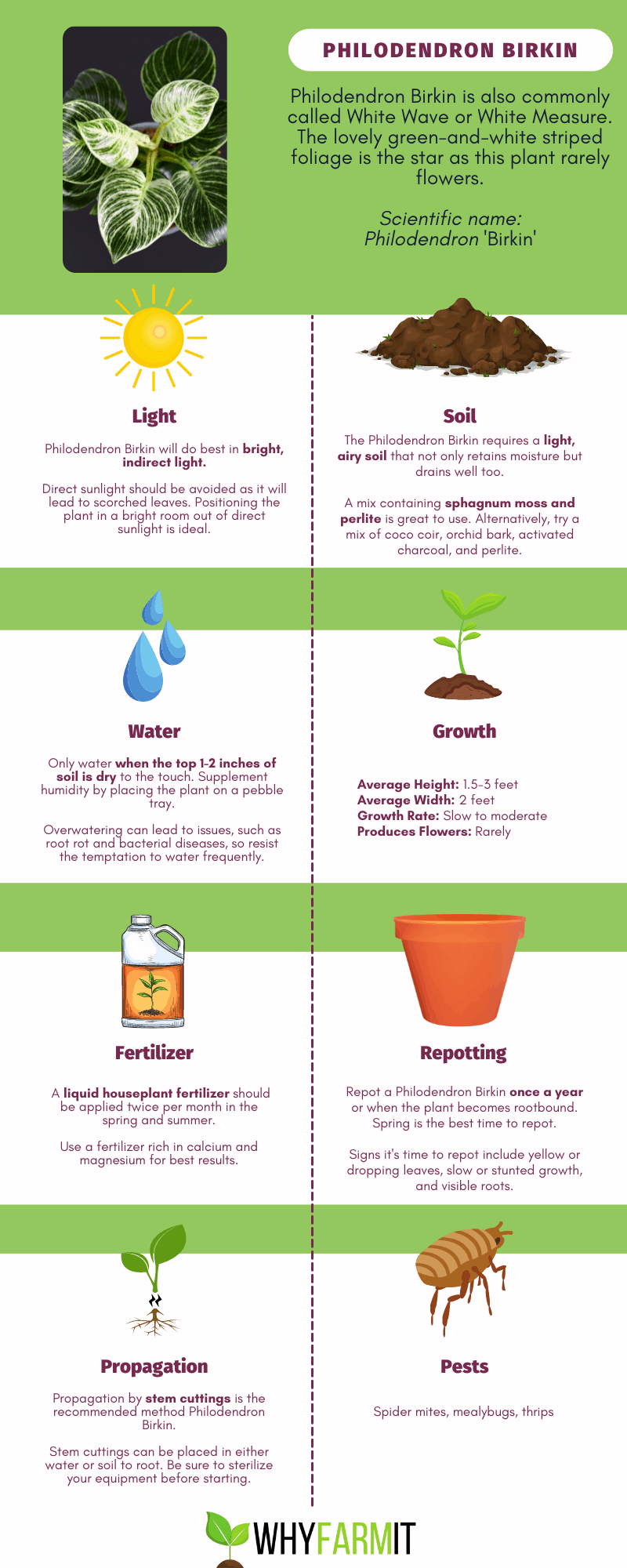 Graphic outlining care of Philodendron Birkin