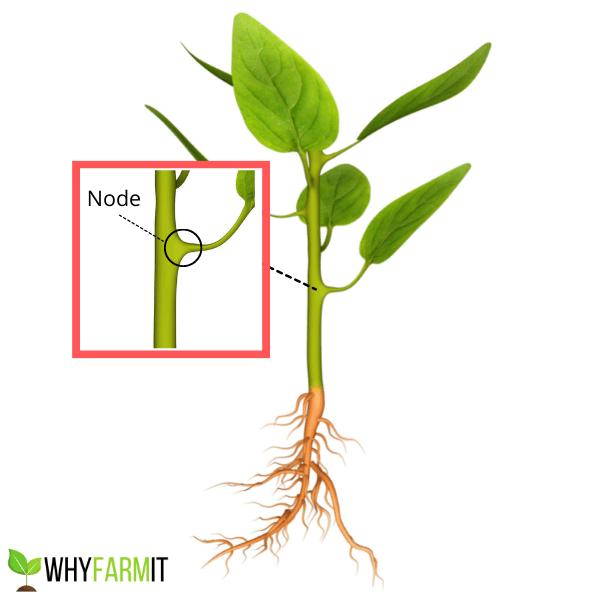 Plant Node Diagram