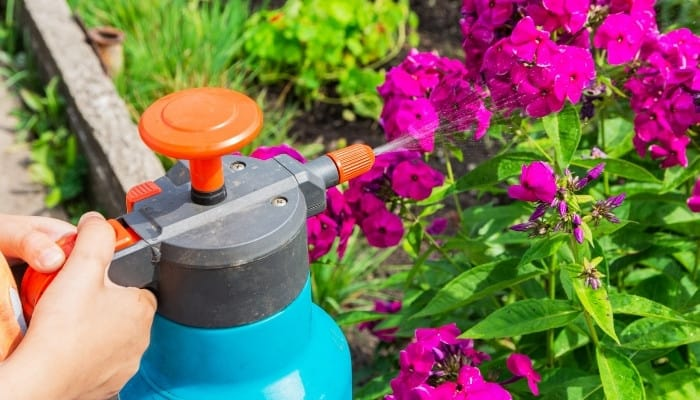 A sprayer attachment hooked onto a hose used for foliar feeding of plants.