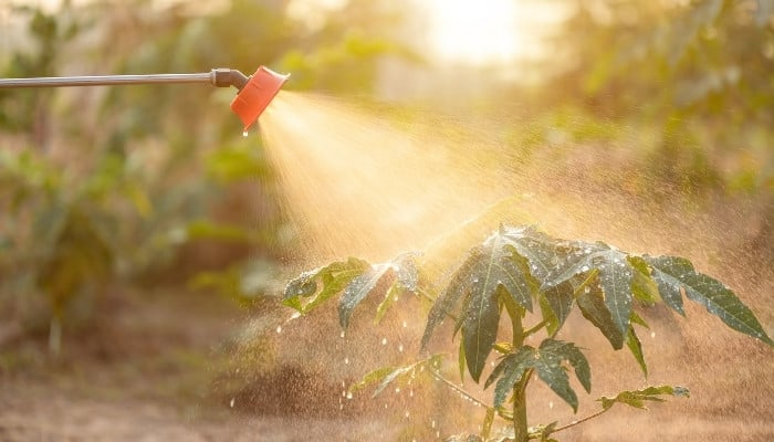 A small tree being sprayed with fertilizer from a hose attachment.