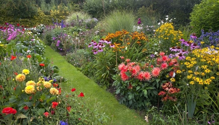 A lovely cottage garden overflowing with colorful blooms.