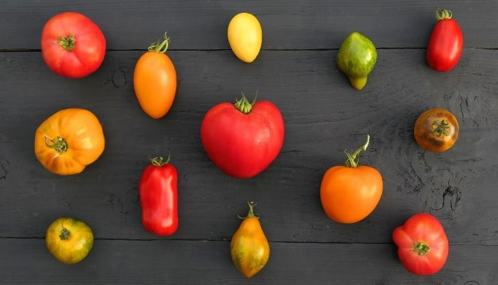 An assortment of various heirloom tomatoes on a black wooden table.