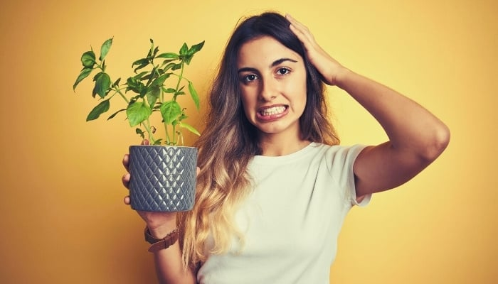 A woman with a frustrated look on her face standing in front of a yellow wall holding a potted basil plant.