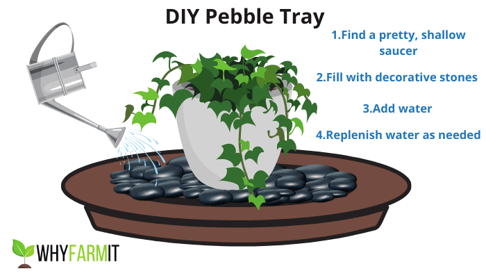 Graphic depicting how to make a pebble tray for plants