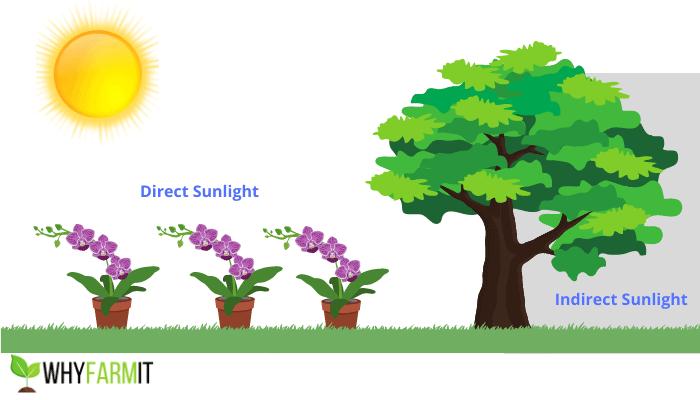 Graphic illustrating three plants in direct sunlight.