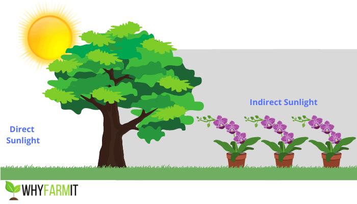 Graphic illustrating indirect sunlight on three plants.