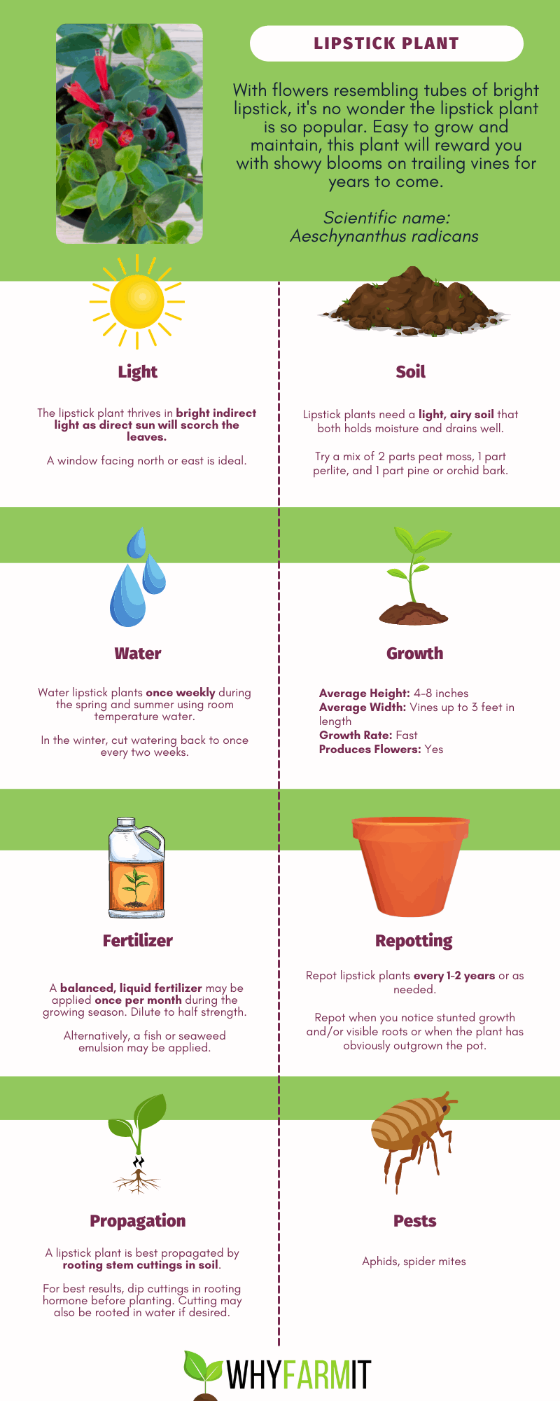 Graphic outlining care of the lipstick plant.