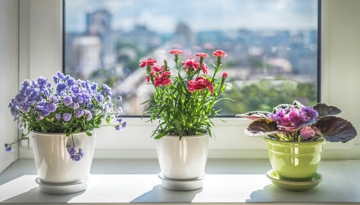 Three colorful plants sitting on a bright window sill overlooking a city.