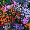 A variety of colorful blooms in a backyard garden.
