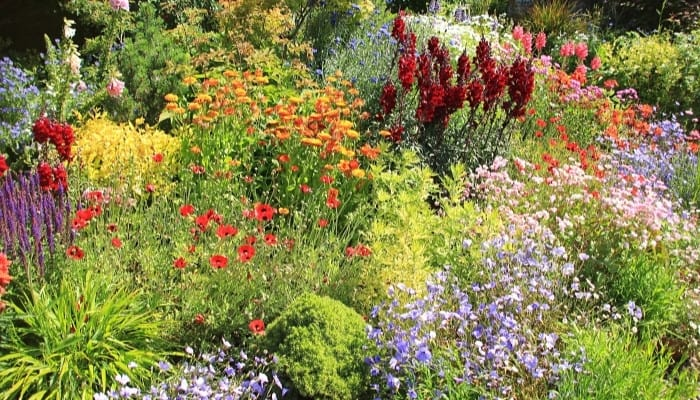 A wide variety of plants and flowers blooming in a large country garden.
