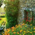 A country garden beside an old stone house in the French countryside.