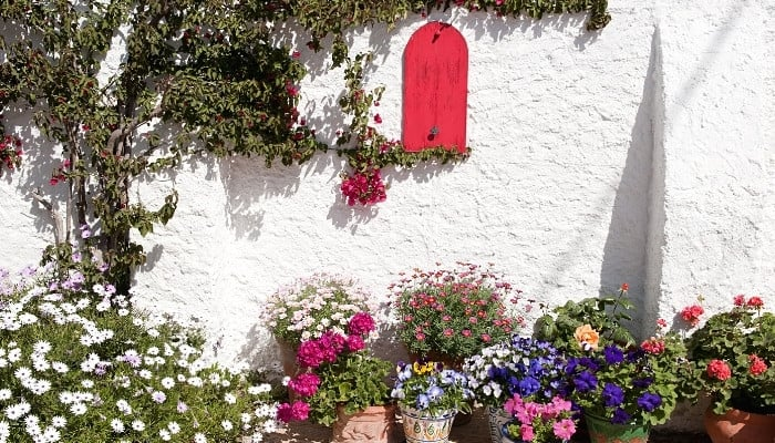 A lovely garden space against a white wall in Spain.