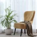 A small majesty palm tree in front of a large curtained window with a tan armchair and coat beside it.