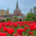 A field of blooming red tulips with a view of the Kremlin in the distance.
